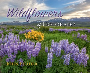 Wildflower cover-2